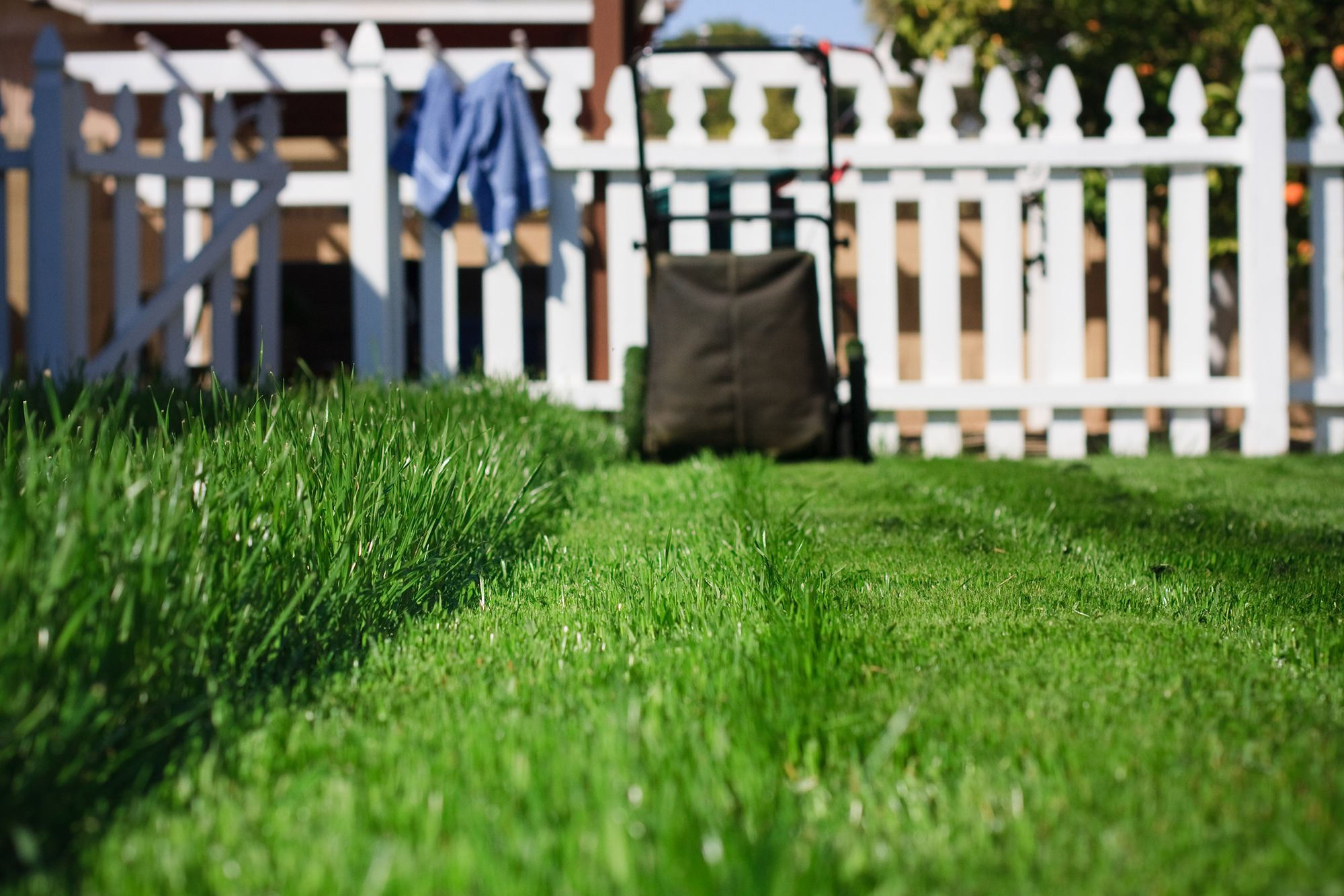 Use-reliable-pesticides-at-the-correct-time How to keep your garden in blossoming condition