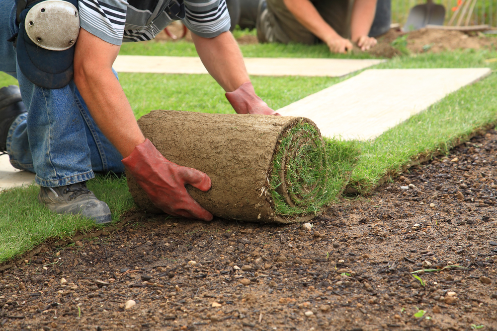 What Is The Best Time Of Year To Install Sod?